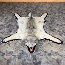 Gray Wolf Rug Taxidermy Mount For Sale #21864 @ The Taxidermy Store