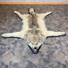 Gray Wolf Rug Taxidermy Mount For Sale #21957 @ The Taxidermy Store