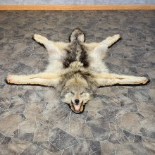 Gray Wolf Rug Taxidermy Mount For Sale #22106 @ The Taxidermy Store