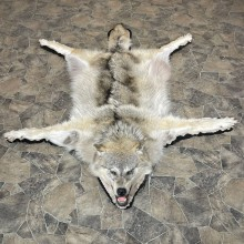 Gray Wolf Rug Taxidermy Mount For Sale #24178 @ The Taxidermy Store