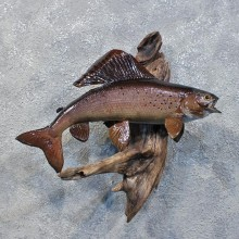 Arctic Grayling Fish For Sale #12212 For Sale @ The Taxidermy Store