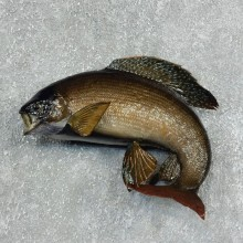 Arctic Grayling Fish Mount For Sale #17944 @ The Taxidermy Store