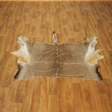 Greater Kudu Hide Taxidermy Skin #17458 For Sale @ The Taxidermy Store