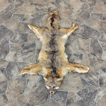 Grey Fox Taxidermy Rug For Sale #23337 @ The Taxidermy Store