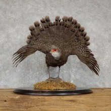 Grey Peacock Pheasant Taxidermy Bird Mount For Sale #19433 @ The Taxidermy Store @ The Taxidermy Store