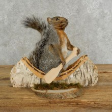 Canoe Squirrel Novelty Mount For Sale #17107 @ The Taxidermy Store