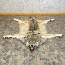 Grey Wolf Rug Taxidermy Mount For Sale #24607 @ The Taxidermy Store