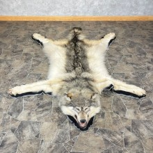 Grey Wolf Rug Taxidermy Mount For Sale #24676 @ The Taxidermy Store