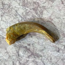 Grizzly Bear Claw For Sale #21916 @ The Taxidermy Store