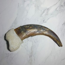 Grizzly Bear Claw For Sale #23773 - The Taxidermy Store