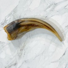 Grizzly Bear Claw For Sale #24883 - The Taxidermy Store
