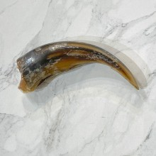 Grizzly Bear Claw For Sale #24884 - The Taxidermy Store