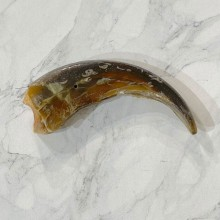 Grizzly Bear Claw For Sale #24886 - The Taxidermy Store
