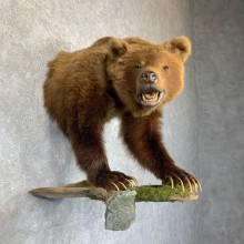 Grizzly Bear Half Life-Size Mount For Sale #23760 @ The Taxidermy Store