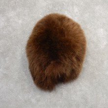 Grizzly Bear Novelty Butt Mount For Sale #21150 @ The Taxidermy Store
