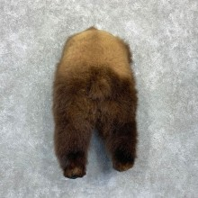 Grizzly Bear Novelty Butt Mount For Sale #23136 @ The Taxidermy Store