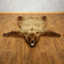 Grizzly Bear Taxidermy Rug Mount For Sale #17500 @ The Taxidermy Store