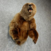 Grizzly Bear 1/2-Life-Size Mount For Sale #17510 @ The Taxidermy Store