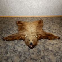 Grizzly Bear Taxidermy Rug Mount For Sale #19921 @ The Taxidermy Store