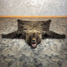 Grizzly Bear Taxidermy Rug Mount For Sale #20340 @ The Taxidermy Store