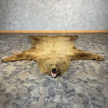 Grizzly Bear Taxidermy Rug Mount For Sale #21185 @ The Taxidermy Store