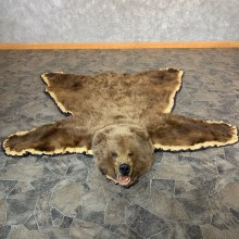 Grizzly Bear Taxidermy Rug Mount For Sale #21979 @ The Taxidermy Store