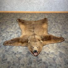 Grizzly Bear Taxidermy Rug Mount For Sale #23685 @ The Taxidermy Store