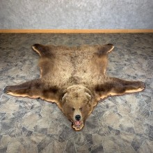 Grizzly Bear Taxidermy Rug Mount For Sale #24010 @ The Taxidermy Store