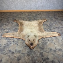 Grizzly Bear Taxidermy Rug Mount For Sale #24014 @ The Taxidermy Store