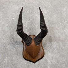 Hartebeest Plaque Mount For Sale #20067 @ The Taxidermy Store