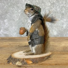 Hiking Squirrel Novelty Mount For Sale #23005 @ The Taxidermy Store