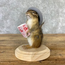 Hipster Chipmunk Novelty Mount For Sale #23238 @ The Taxidermy Store