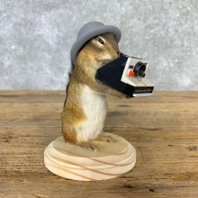 Hipster Chipmunk Novelty Mount For Sale #23239 @ The Taxidermy Store