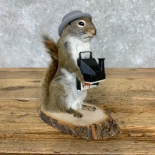 Hipster Squirrel Novelty Mount For Sale #23469 @ The Taxidermy Store