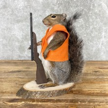Hunting Grey Squirrel Novelty Taxidermy Mount For Sale
