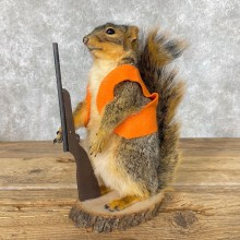 Novelty Fox Squirrel Taxidermy Mount For Sale