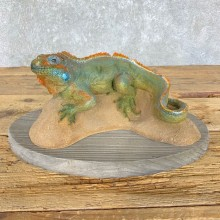 Igauna Replica Taxidermy Mount For Sale