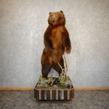 Inland Grizzly Bear Taxidermy Mount For Sale