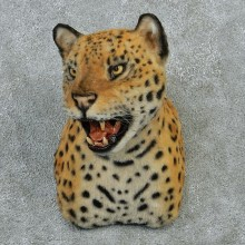 Jaguar Taxidermy Shoulder Mount #12919 For Sale @ The Taxidermy Store