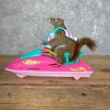 Jet Ski Squirrel Novelty Mount For Sale #24221 @ The Taxidermy Store