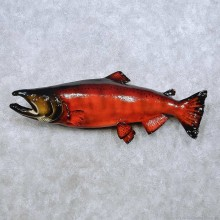 Spawning King Salmon Fish Mount For Sale #14453 @ The Taxidermy Store