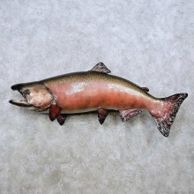 King Salmon Fish Mount For Sale #14366 @ The Taxidermy Store
