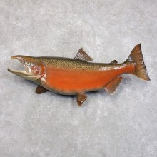 King Salmon Fish Mount For Sale #22284 @ The Taxidermy Store