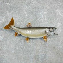 Lake Trout Freshwater Fish Mount For Sale #17943 @ The Taxidermy Store