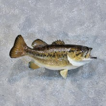 Largemouth Fish Mount #10220 For Sale @ The Taxidermy Store
