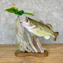 """27.5"""" Largemouth Bass Taxidermy Fish Mount For Sale"""