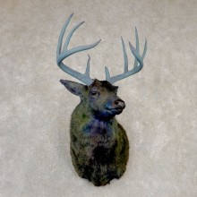 Legendermy Obsidian Whitetail Deer Shoulder Mount For Sale #20517 @ The Taxidermy Store