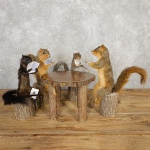Life Size Squirrel Taxidermy Set #20310 For Sale @ The Taxidermy Store