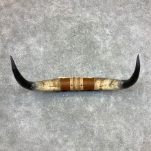 Longhorn Steer Plaque For Sale #23356 @ The Taxidermy Store
