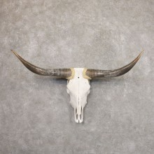 Longhorn Steer Skull European Mount For Sale #22186 @ The Taxidermy Store